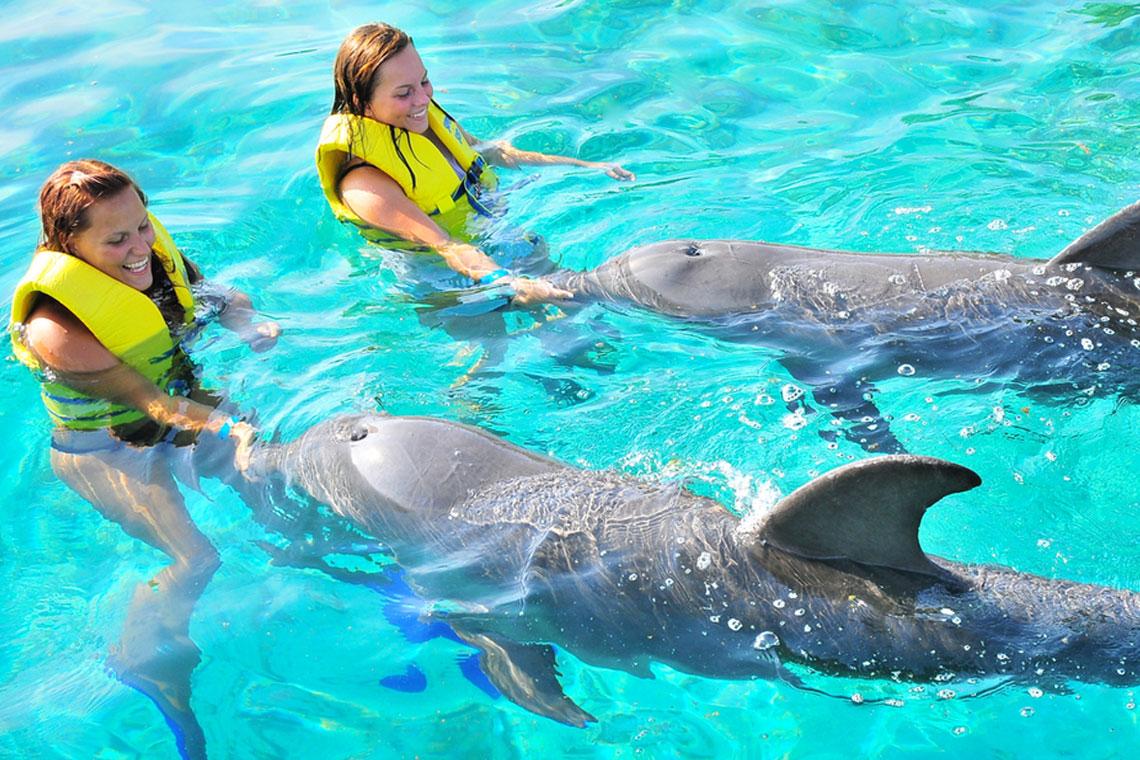 Roatan Wonderland Tours Dolphin Action Swim