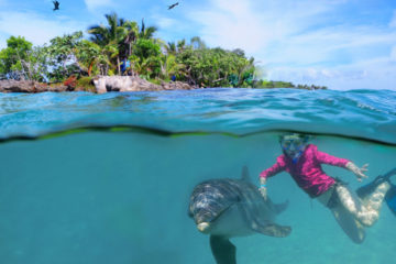 Roatan Wonderland Tours Dolphin Swim and Snorkeling